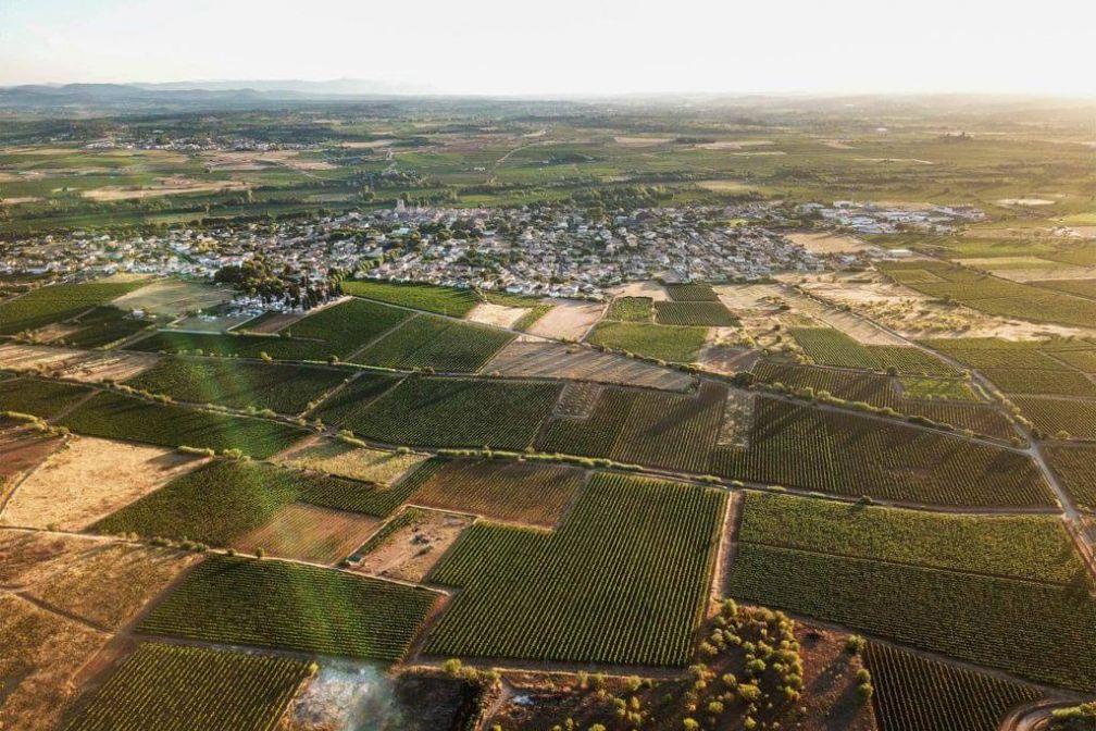 Dans la campagne autour d'Avignon, les vignes sont le but d'escapades gourmandes © Domaine des Amiel