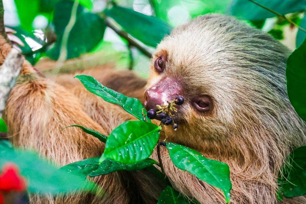 La faune sauvage à découvrir dans les jungles épaisses © DR