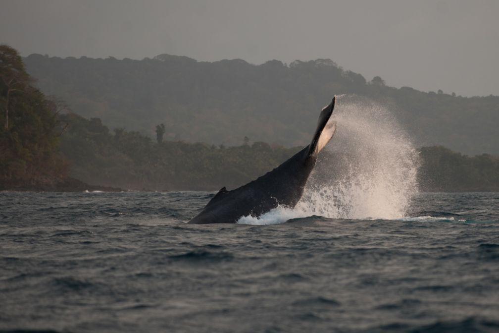 Bom Bom Island Resort - Observation des baleines Golfe de Guinée