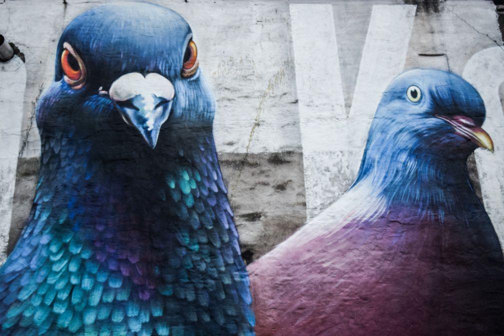 D'immenses pigeons façon street art : bienvenue à la Brasserie De Koninck, institution de la bière à Anvers © Yonder.fr