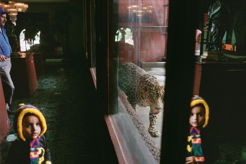 Tijuana, 1995. Race track zoo. © Alex Webb / Magnum Photos