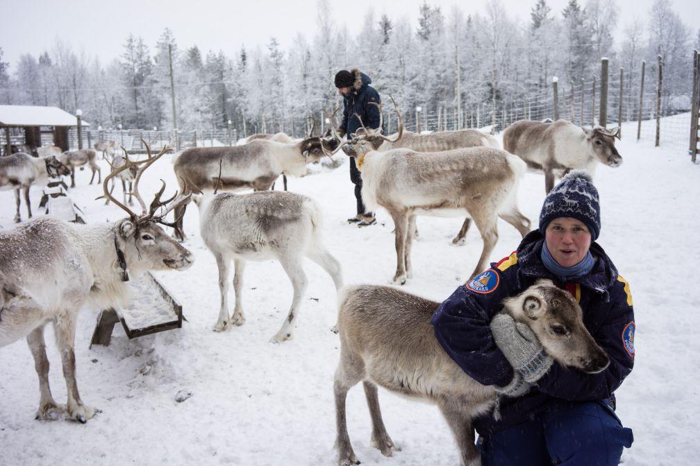 Christina Löther, de ##Ylitalon Poromatkailu@@http://poromatkailu.fi caline un jeune renne.