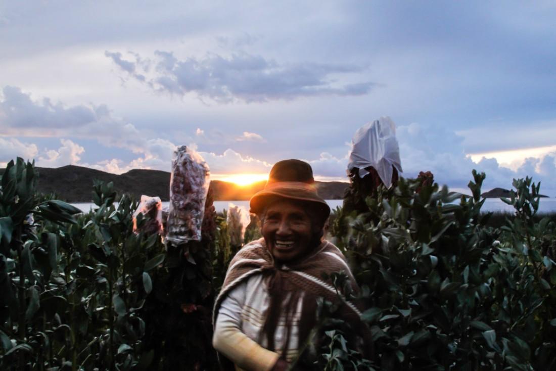 Juana, dans un champ de Quinoa, aux abords du Lac Titicaca. © Cédric Aubert