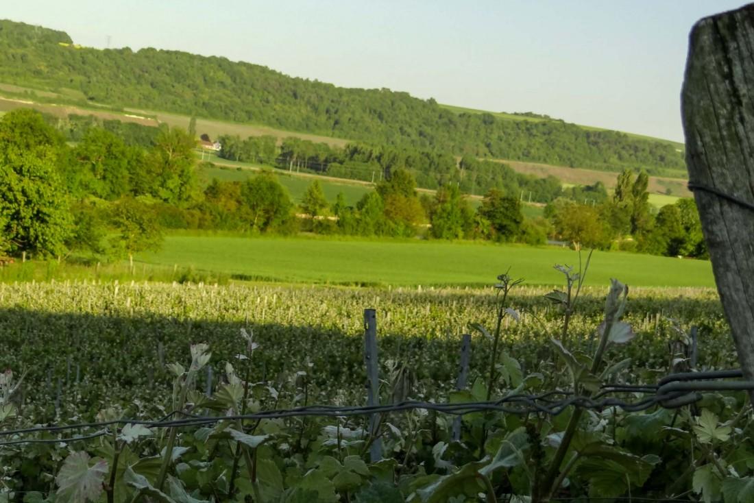 Randonnée dans les vignobles de champagne de l'Aisne © MDT