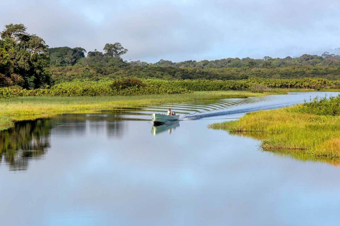Se frayer un chemin au petit matin entre les herbes flottantes du marais de Kaw © Jean-Jacques Serol