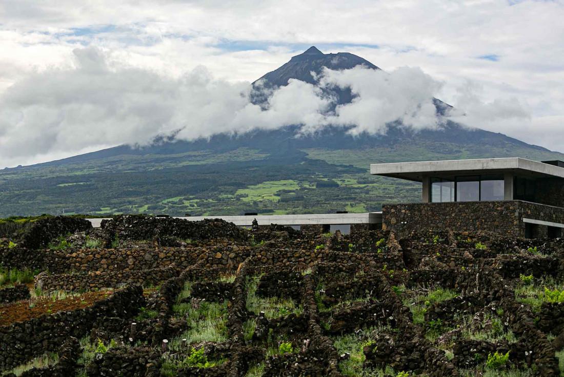 Le nouveau chais de la Azores Wine Company sur l'île de Pico, avec le plus haut sommet du Portugal à l'arrière-plan © Rui Soares