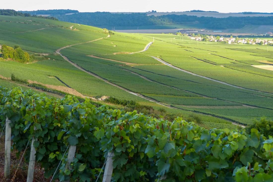 Les vignobles de la Vallée de la Marne s'étagent doucement le long des coteaux © MDT