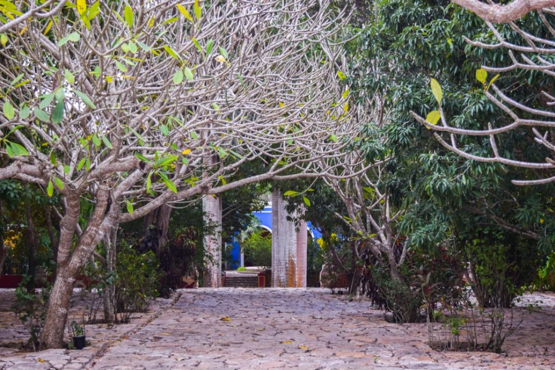 Partout dans l'Hacienda, une extraordinaire végétation © Yonder.fr