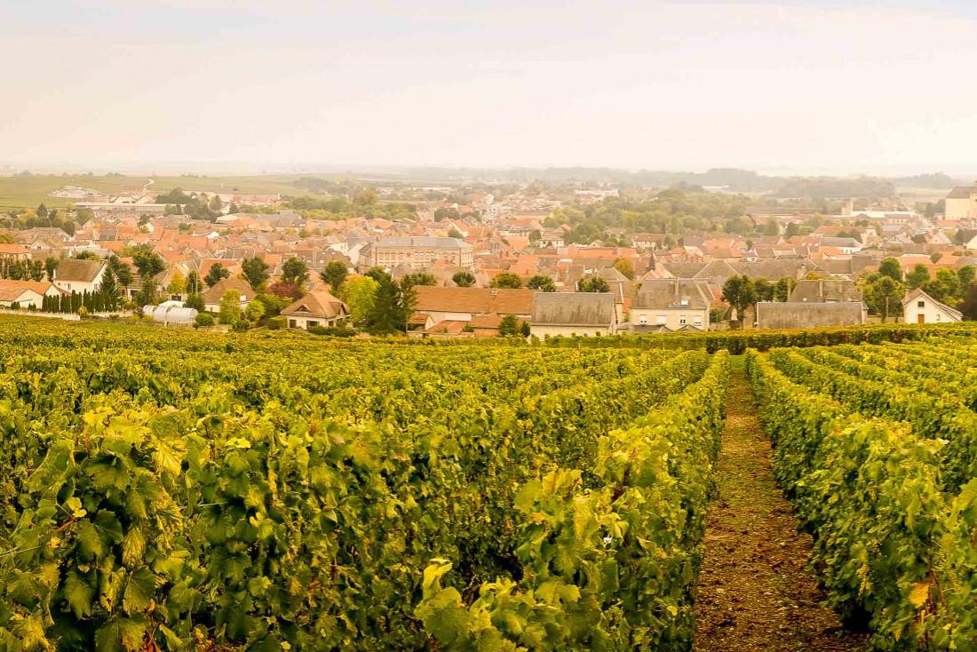 Vue sur Épernay depuis les vignes © A. Couvreux / OT Épernay