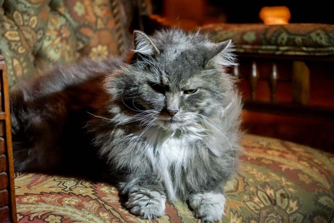 Le chat de la Nagle Warren Mansion B&B à Cheyenne © YONDER.fr
