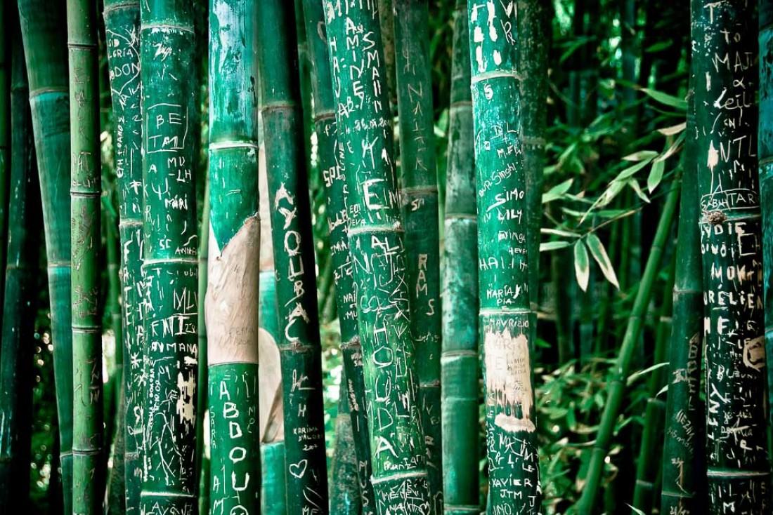 Bambous au célèbre Jardin Majorelle | © Flickr CC – Chris Zielecki -  https://flic.kr/p/aaTbyZ
