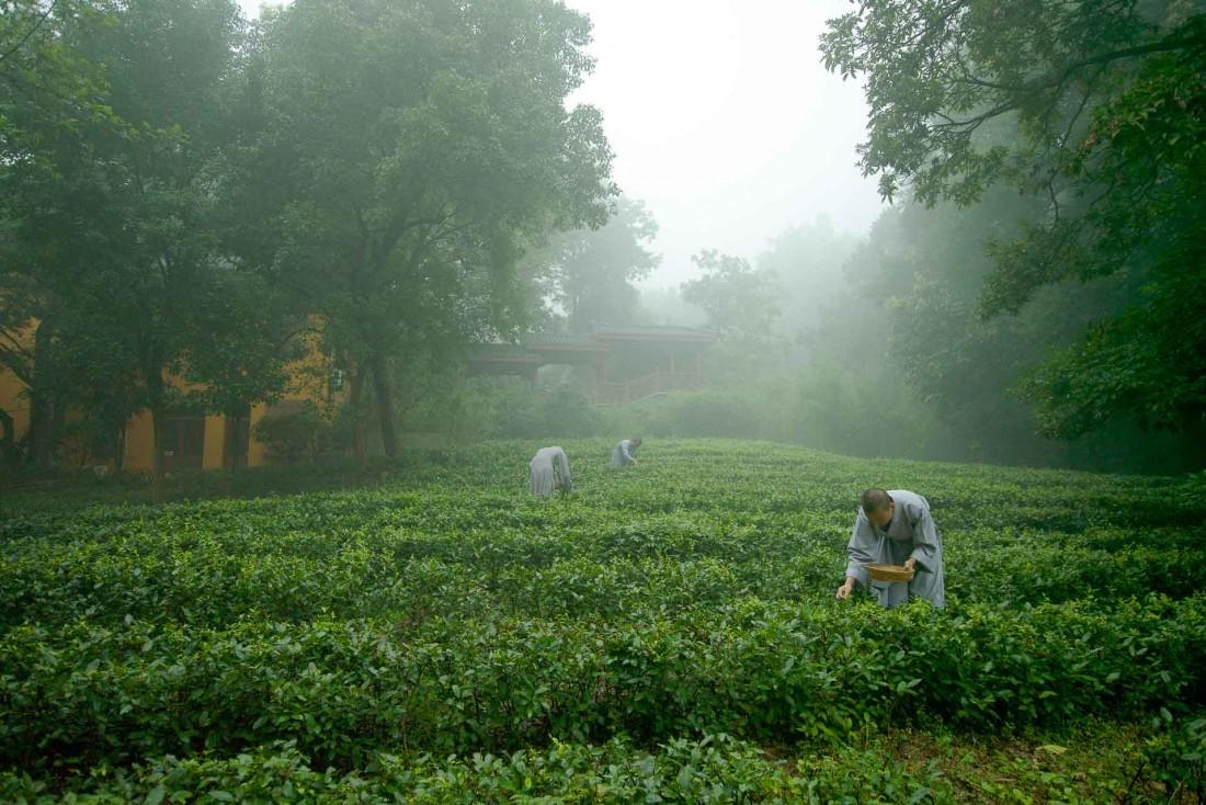 L'hôtel dispose de ses propres plantations de thé © Aman