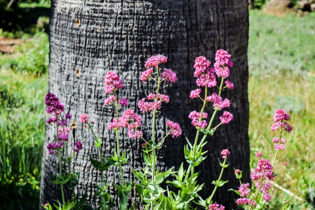 Fleurs sur l'Île Saint-Honorat © Yonder.fr