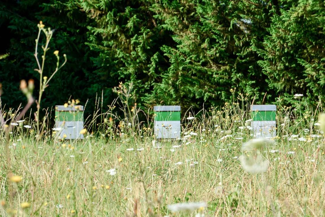Les trois premières ruches de Jean-Michel Lorain © YONDER.fr