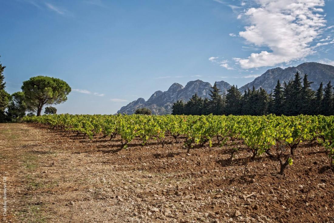 Les vignes du Château Romanin © DR