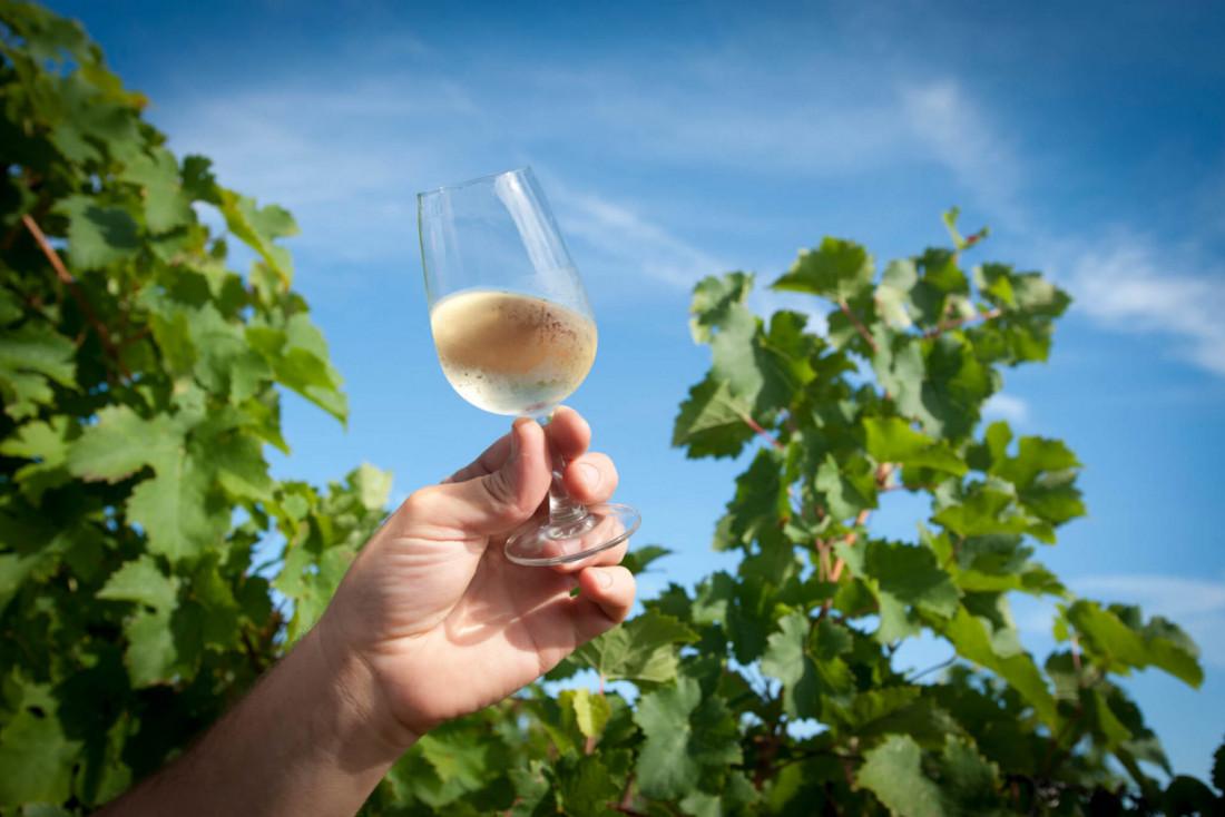 Les vins du Domaine du Tastet © DR