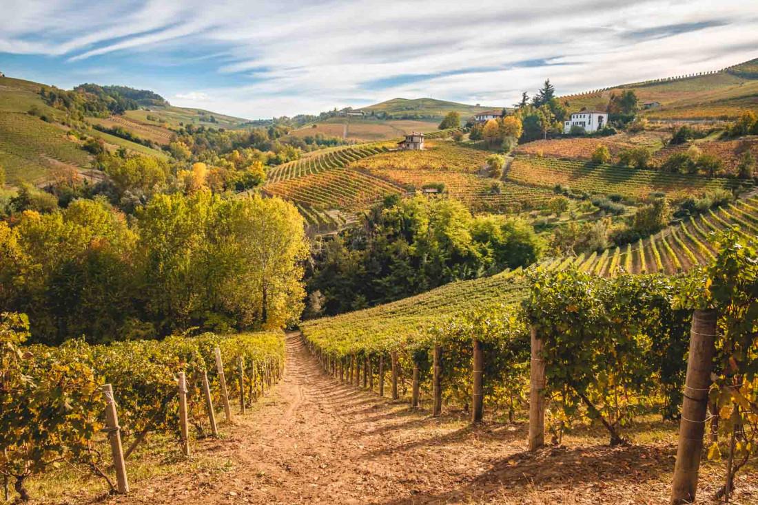 Les vignes de Barolo dans la région des Langhe au Piémont ©Codegoni Daniele - AdobeStock