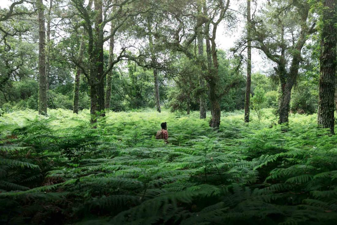 La forêt landaise, terrain d'exploration et de découvertes © Tripinwild