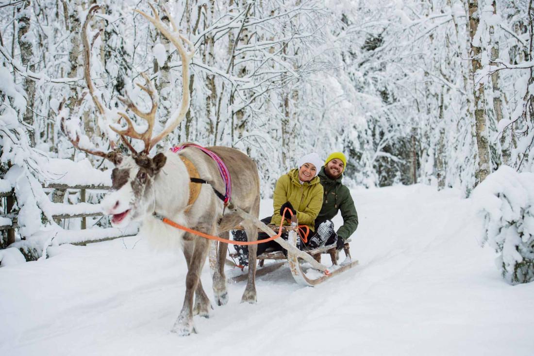Promenade en traîneau à renne en forêt © Juho Kuva - VisitFinland