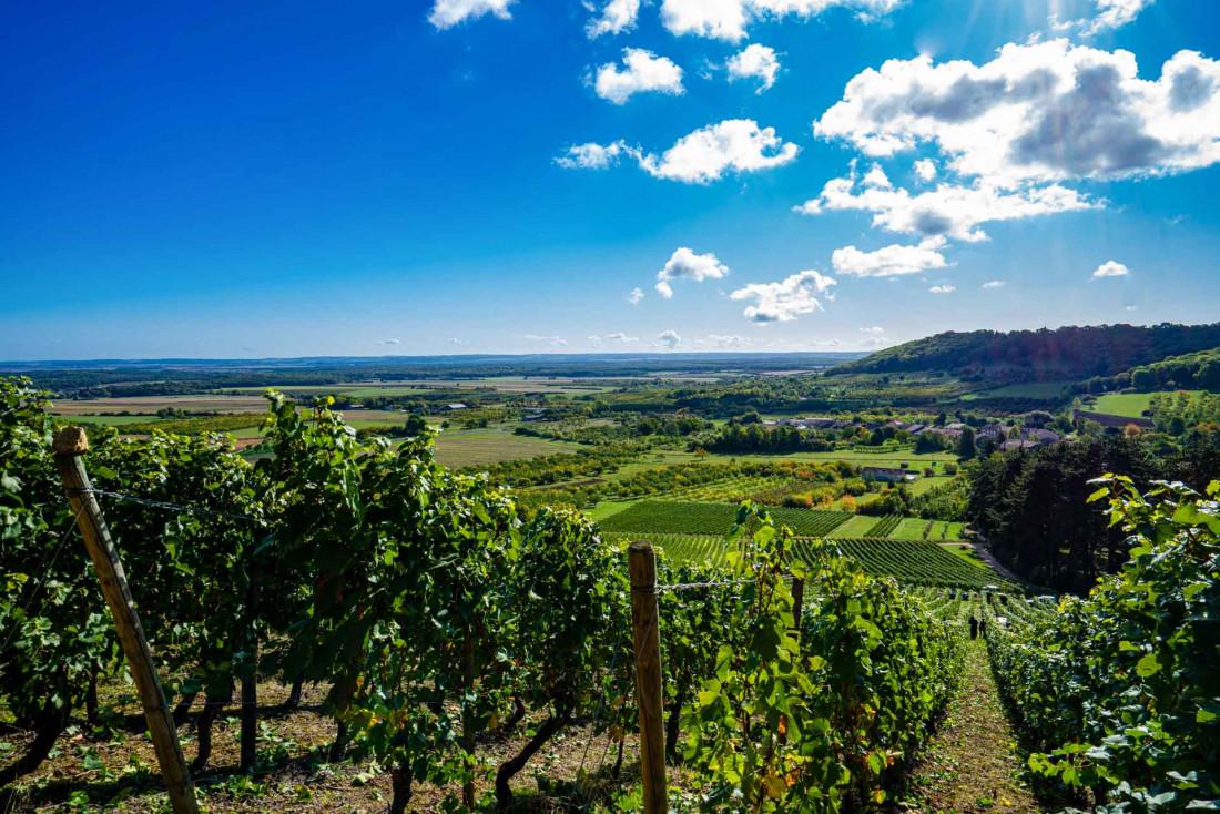Vignes sur les Côtes de Meuse © Artipair