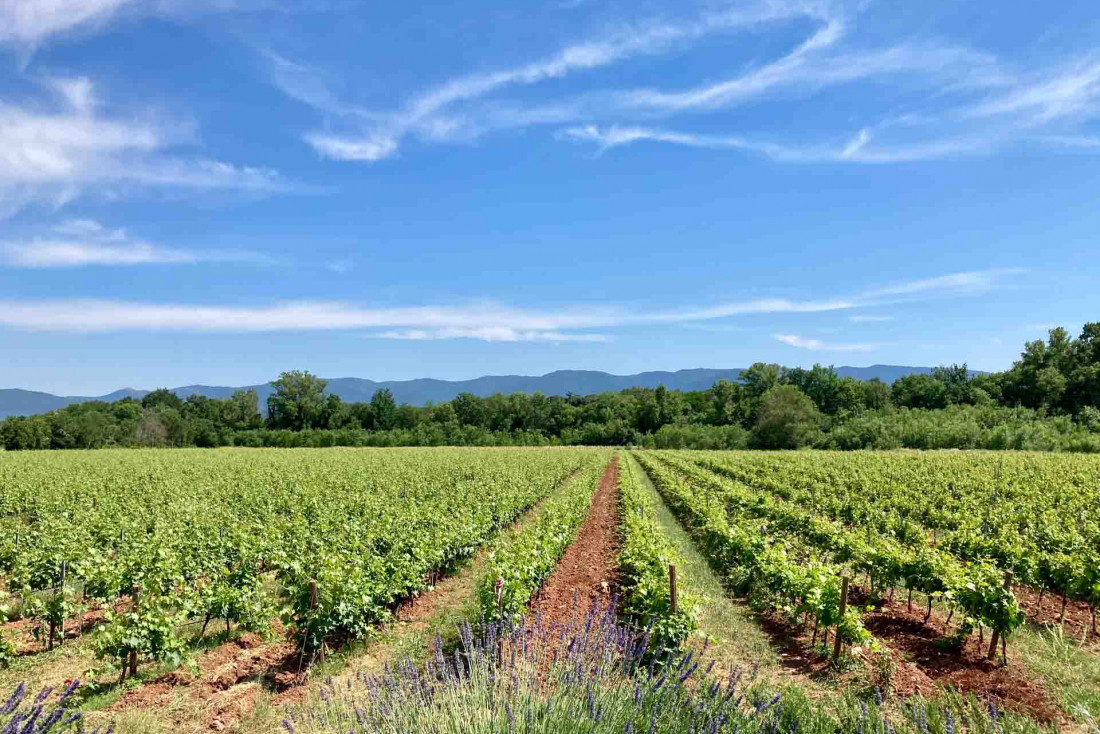 Les vignes du domaine d'Ultimate Provence © Pierre Gautrand | YONDER.fr