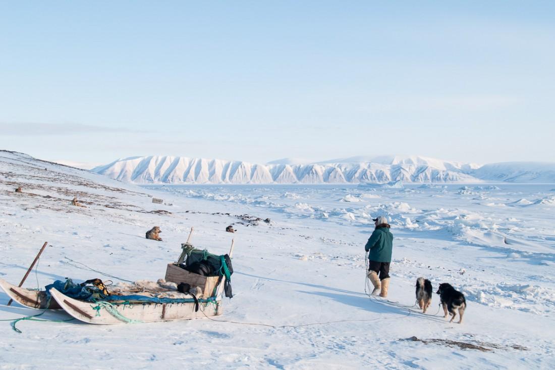 Les chiens de traineau sont attachés dans une zone à l'écart de la ville. Seuls les chiots ou les femelles enceintes peuvent être gardées près des maisons.