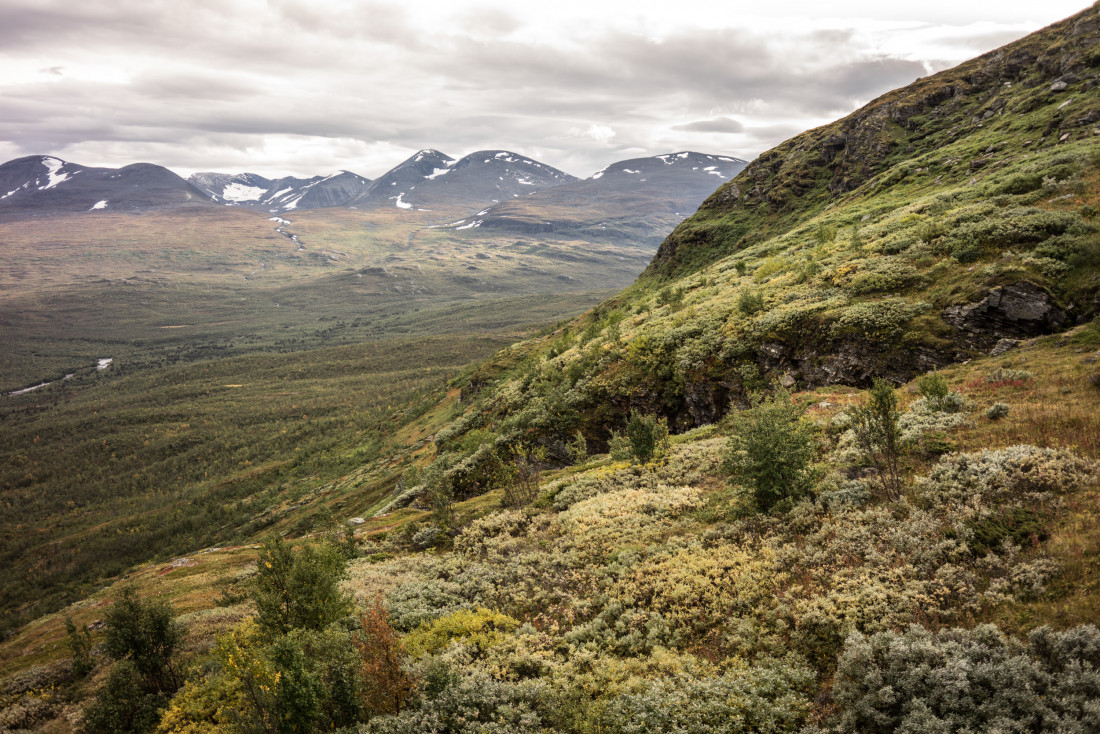 La végétation qui recouvre les pentes du mont Njullá depuis le télésiège de l'Aurora Sky station.