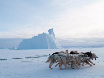 Les chiens d'un autre traineau passent devant un iceberg pris dans la glace sur le trajet vers Siorapaluk.