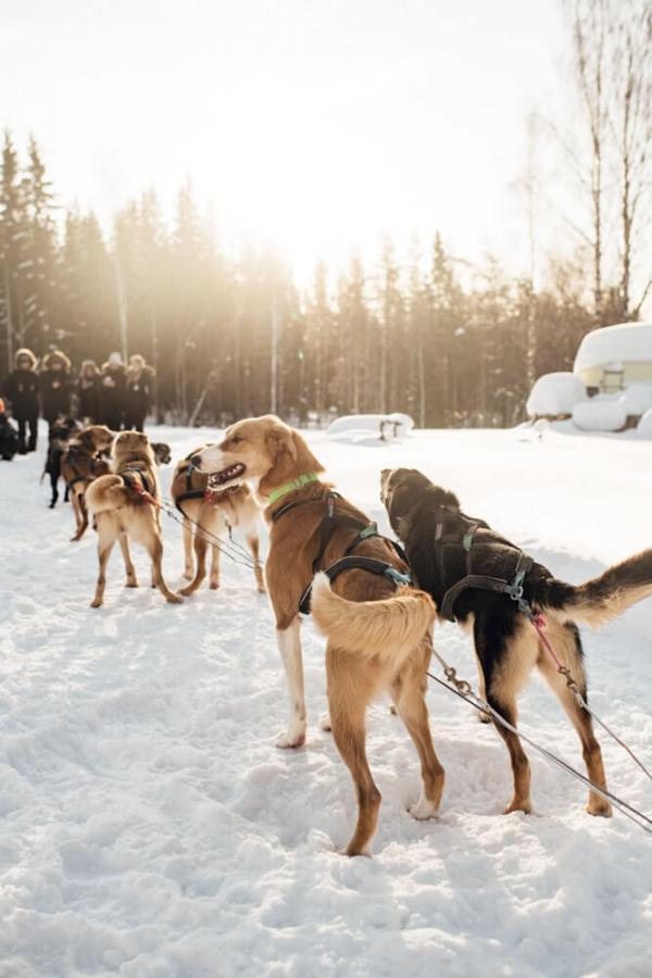 Arctic Bath chiens de traineau © Karin Lundin