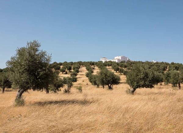La vue panoramique porte sur la forêt de la Serra d'Ossa et sur les magnifiques châteaux d'Evoramonte et d'Estremoz.