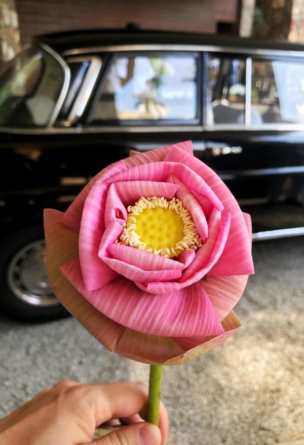 Fleur de lotus, avant l'heure du départ, à nouveau en limousine Mercedes © YONDER.fr