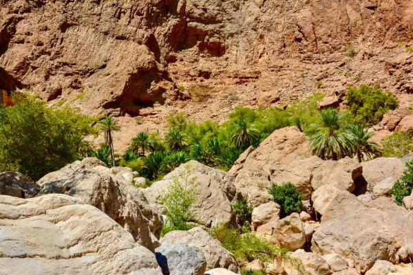 Palmiers et rochers du Wadi Shab. © Emmanuel Laveran.