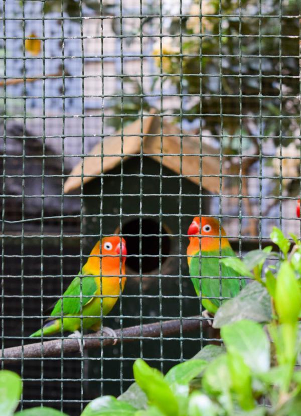 Des oiseaux guettent les va-et-vient des hôtes de l'Albergo © YONDER.fr