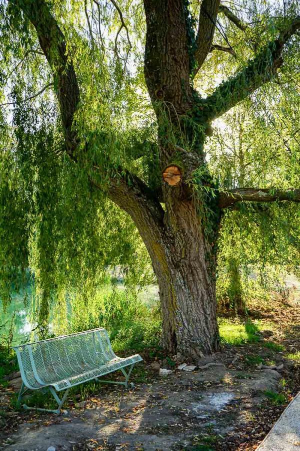 Les Sources de Cheverny : sous le saule pleureur © MB   YONDER.fr