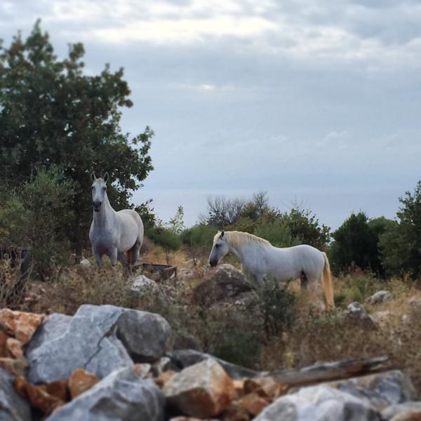 Dans la campagne proche d'Areopoli, l'atmosphère est presque irréelle © Yonder.fr
