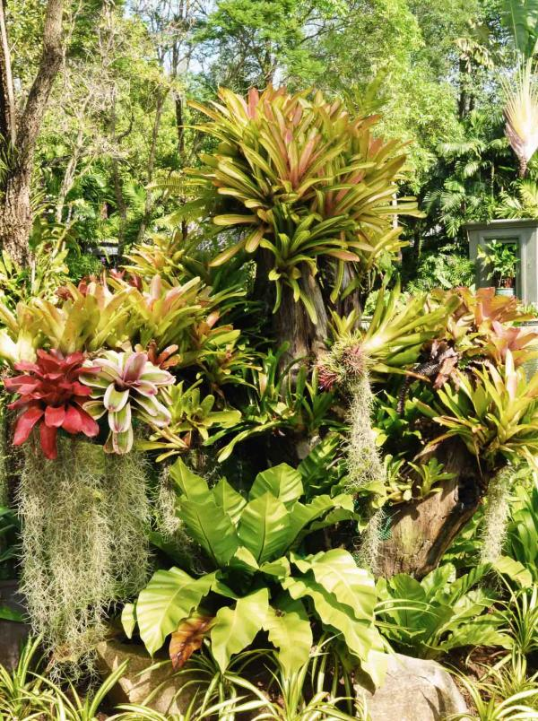 Les décors végétaux que l'on retrouve dans les allées de l'Anantara © Constance Lugger