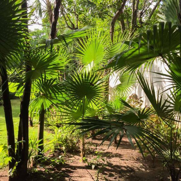 Nature luxuriante dans l'enceinte de l'hôtel © Yonder.fr