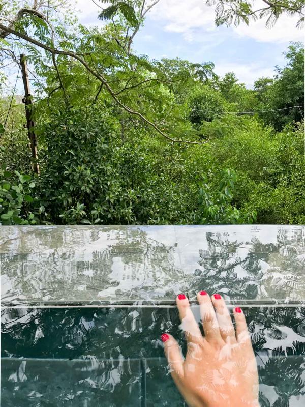 Reflet Mangroves sur la piscine © Houda El Moumouhi