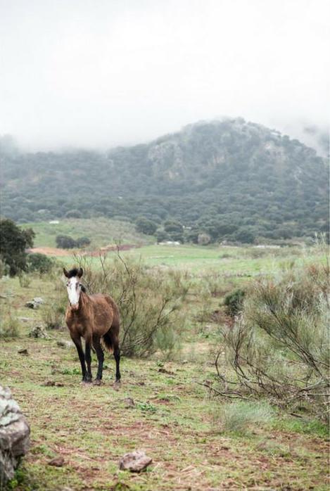 La Donaira | Andalousie © DR