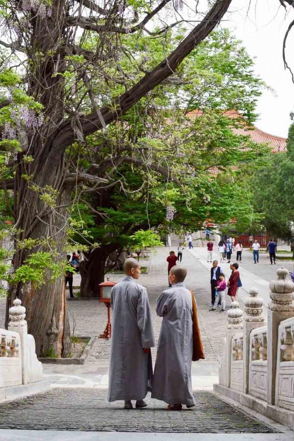 Les moines habitent encore les temples, même en pleine ville. © Pierre Gunther / YONDER.fr