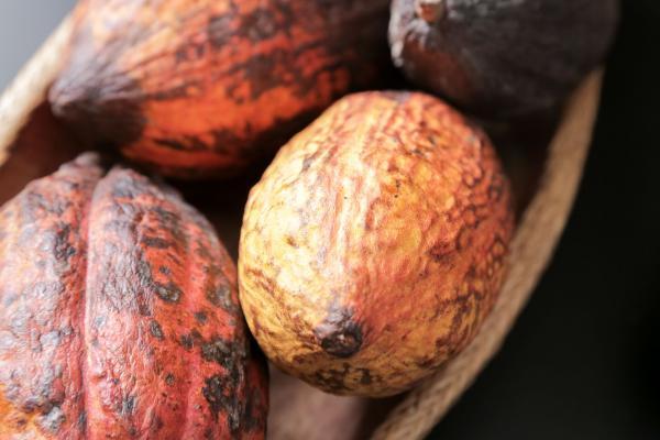 Le cacao aux multiples propriétés.
