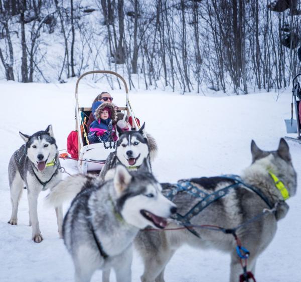 Balade en chiens de traîneau © Vincent Lottenberg