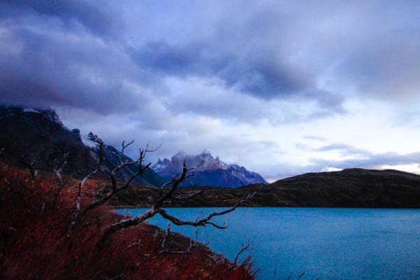 Nature morte au Torres del Paine : le Parc porte les séquelles des incendies du passé | © Cédric Aubert