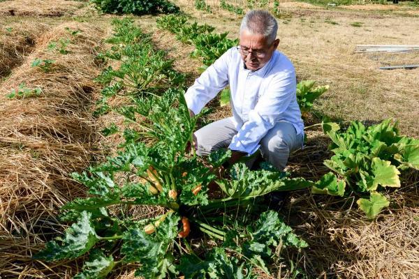 Le chef Jean-Michel Lorain dans son potager « plus que bio » de 3,000 m2 à Joigny © YONDER.fr