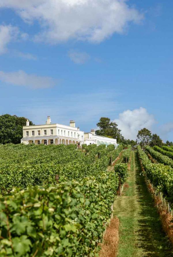 Lympstone Manor Hotel – Vignes © DR