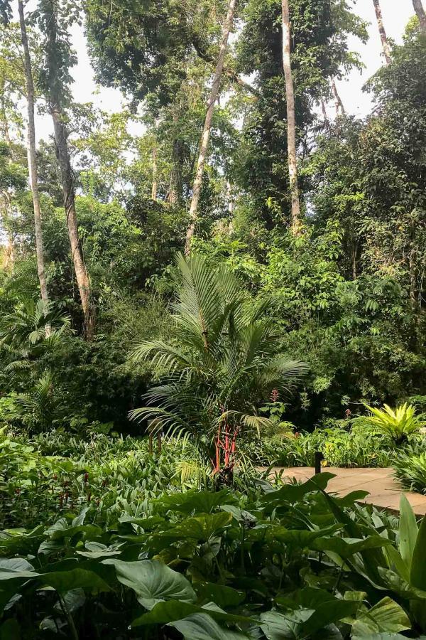 The Datai Langkawi - La jungle entourant l'hôtel © Mireille Gignoux / YONDER.fr