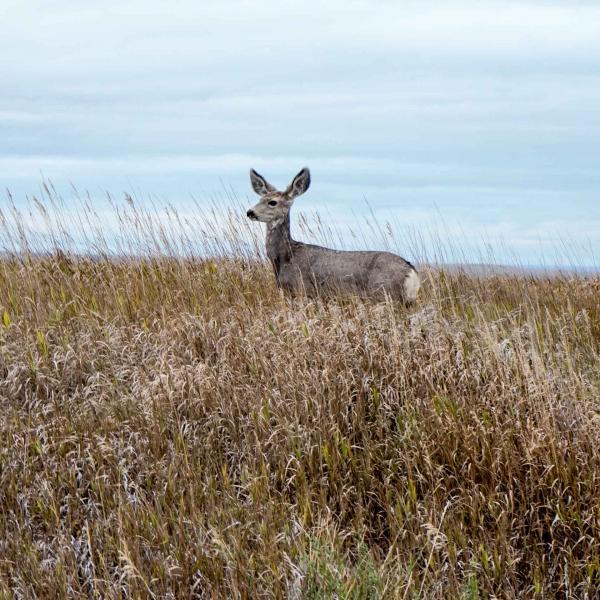 Il n'est pas rare d'apercevoir des antilopes dans le parc © YONDER.fr