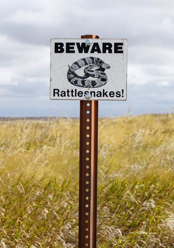 Attention aux serpents à sonnettes, ils sont également omniprésents dans le parc © YONDER.fr