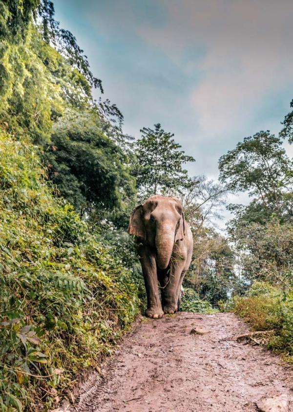 Refuge d'éléphant en Thaïlande © Deanna Deshea