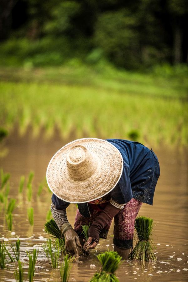 Entretien des rizières © Eduardo Prim